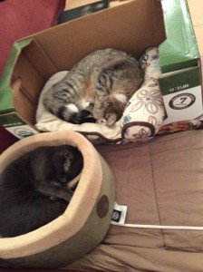 Jenny and Sebastian have important cat bed business to handle.