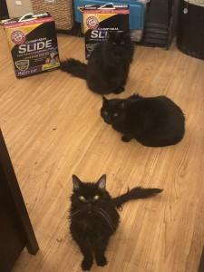 threeblackcats